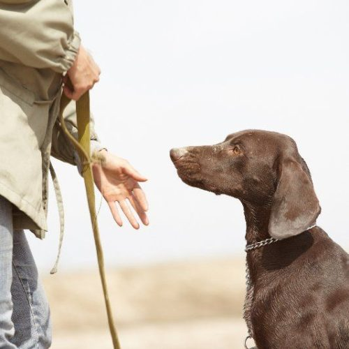 Dog Training Obedience Class