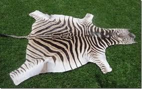 Zebra skin pillows