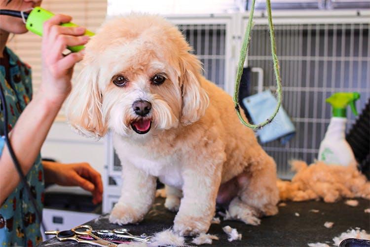 Mobile Pet grooming